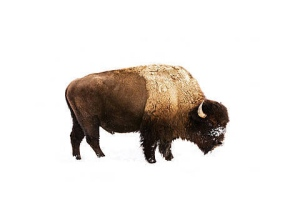 "Julia Christe  ""Buffalo 3"""