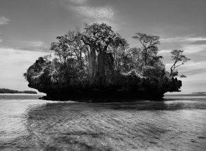 Baobab trees on Mushroom Island Madagascar 2010