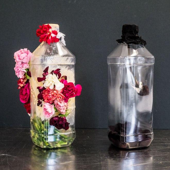 Flora Chou | Life & Death