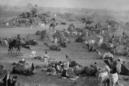 Camel Market, Nagaur, Rajasthan, India, 1956